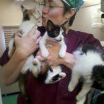 neighborhood vet new york dr loose dvm kissing cats, kittens