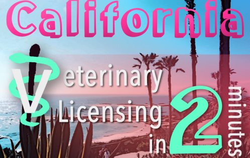 California Veterinary Licensing 2 minutes vet staff symbol, ocean coast palm tree scenery instagram