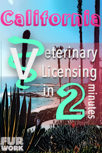 California Veterinary Licensing 2 minutes vet staff symbol, ocean coast palm tree scenery pinterest pin
