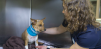 Pet Emergency Services Alaska ICU vet tech with tracheostomy patient