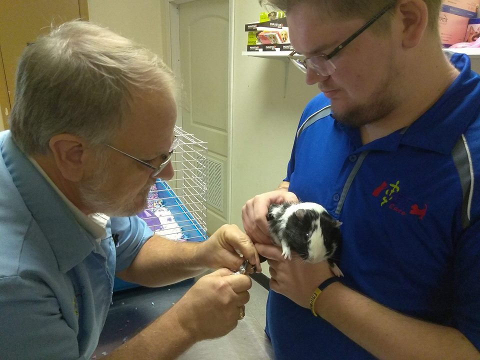 Associate Veterinarian, V E T  Care Hospital, Fort Worth, TX