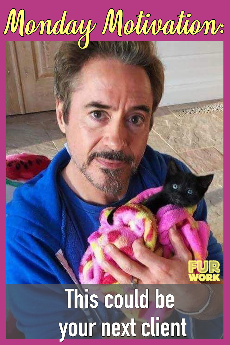 Monday Motivation veterinarian veterinary technician vet tech. Your next client Robert Downey Jr. cat