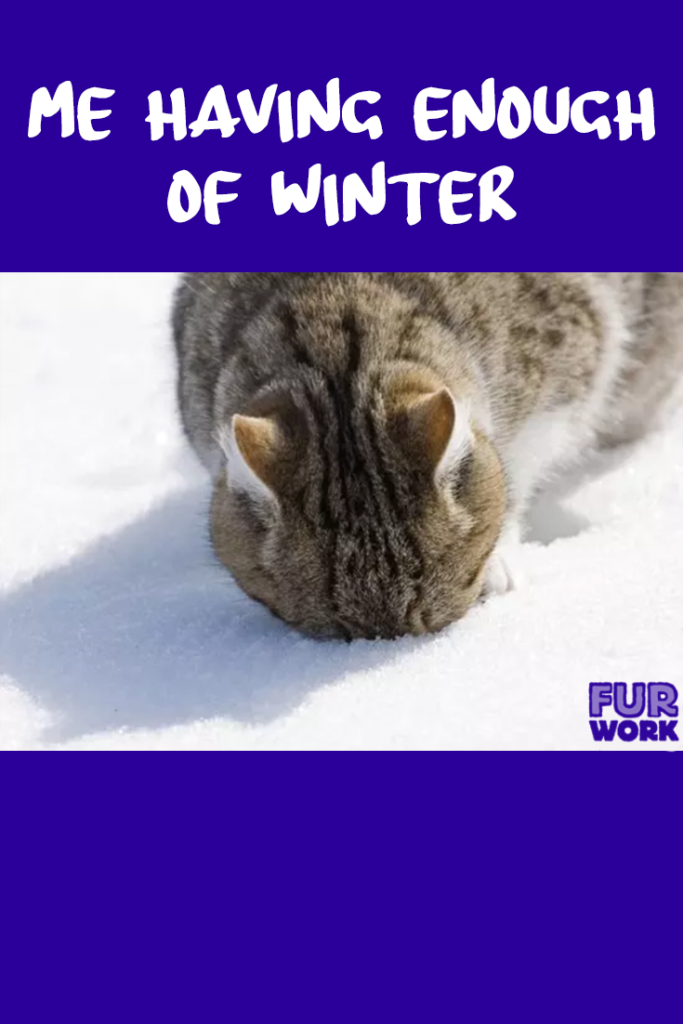 Me having enough winter cat face in snow veterinarian vet tech meme