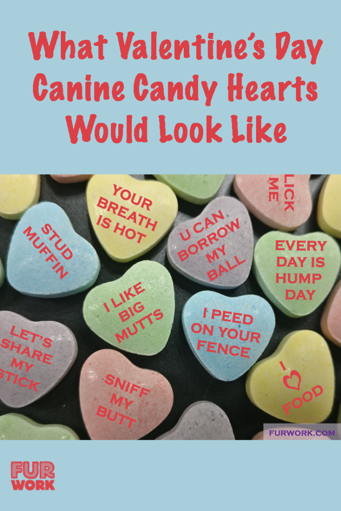 Valentine's Day dog candy hearts vet tech meme