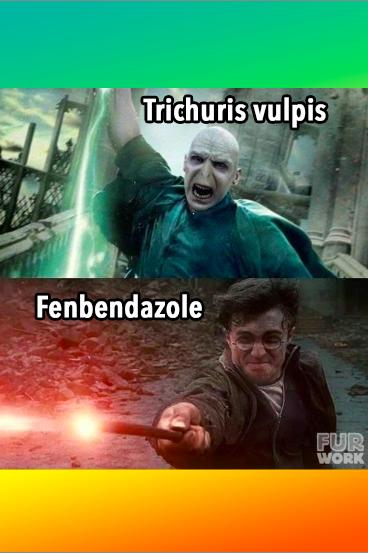veterinary harry potter meme trichuris vulpis (whipworm) vs. fenbendazole (panacur)